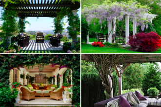 21 id es de plantes grimpantes pour sublimer votre pergola des id es. Black Bedroom Furniture Sets. Home Design Ideas
