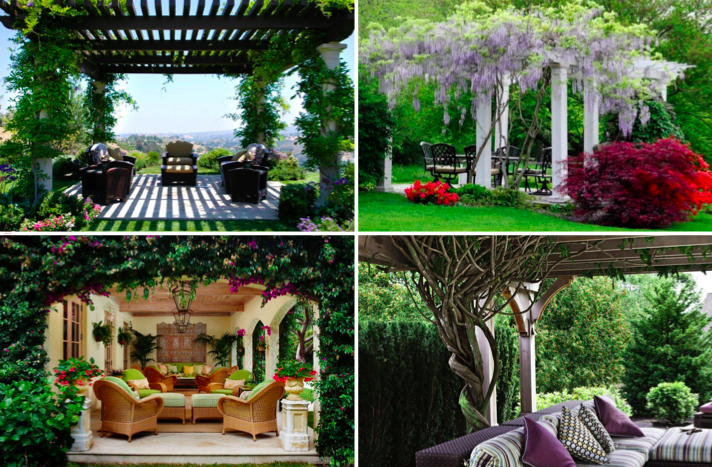 21 id es de plantes grimpantes pour sublimer votre pergola des id es. Black Bedroom Furniture Sets. Home Design Ideas
