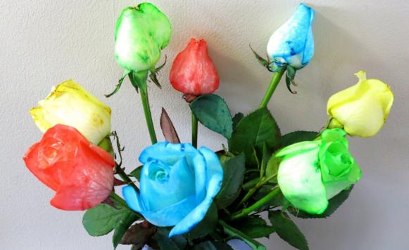comment faire des roses multicolores des id es. Black Bedroom Furniture Sets. Home Design Ideas