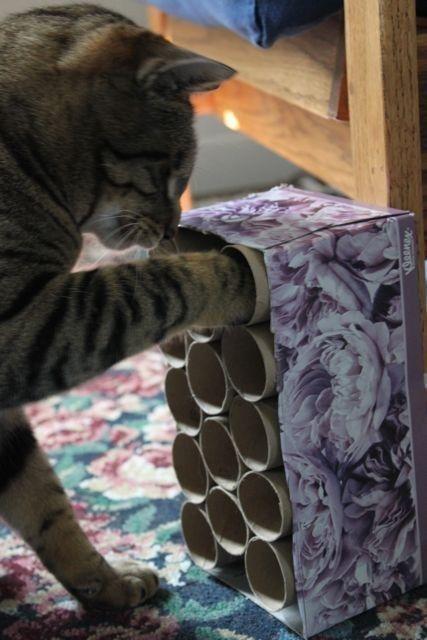 chat joue croquettes