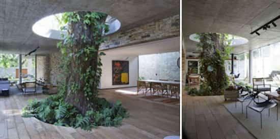 16-arbre-pousse-dans-maison