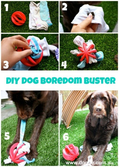 20 jouets à fabriquer soi-même rien que pour vos chiens