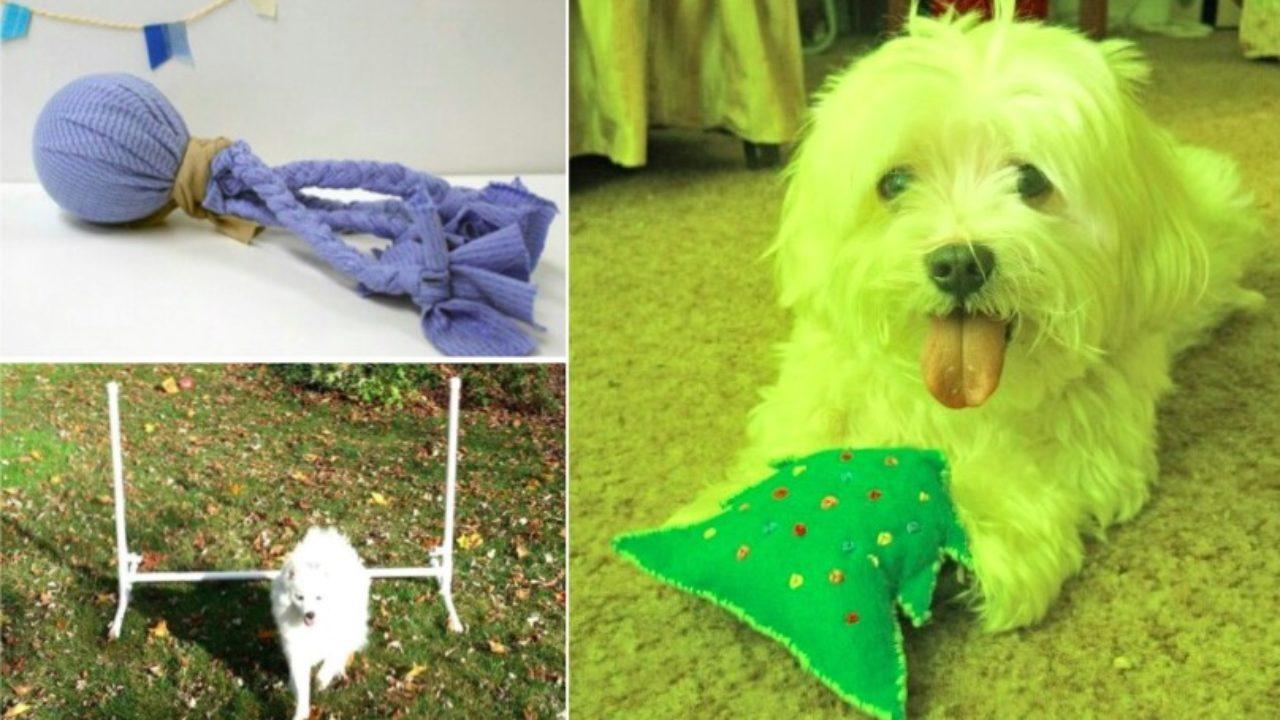 Comment fabriquer des jouets pour son chien ?