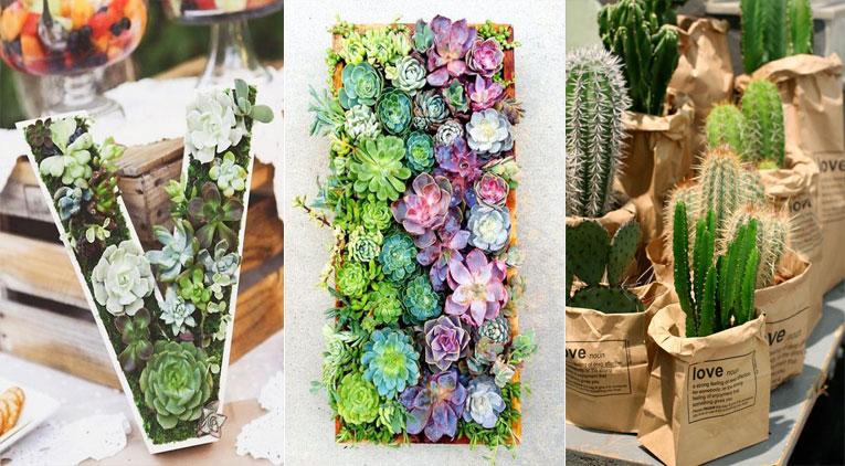 10 mani res de d corer votre int rieur avec des plantes succulentes des id es - Decorer terras avec plantes ...