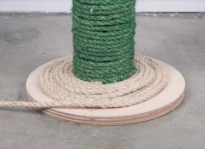 arbre a chat cactus