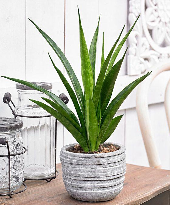 purifiez votre maison avec ces 14 belles plantes d 39 int rieur des id es. Black Bedroom Furniture Sets. Home Design Ideas