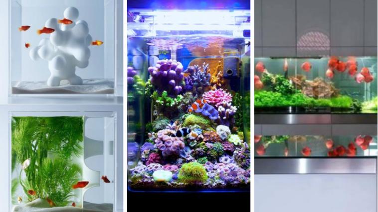 10 magnifiques aquariums qui vont vous donner envie d for Donner des poissons