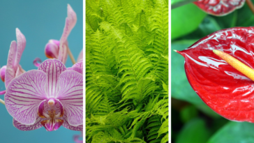 plantes de sdb