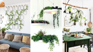 plantes suspensions