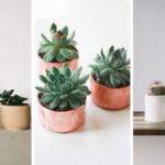 pot succulentes