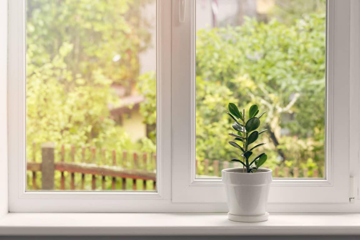 rebord de fenêtre lumière plante