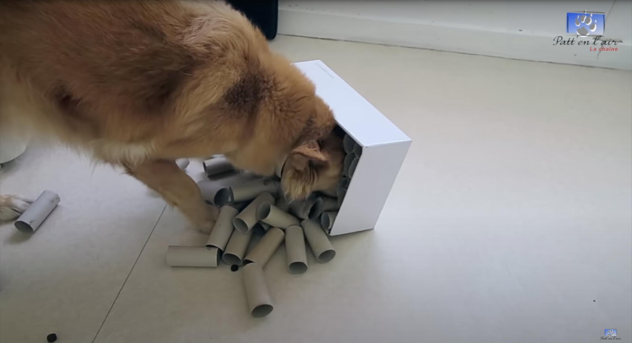 chien qui renverse une boite de jeu