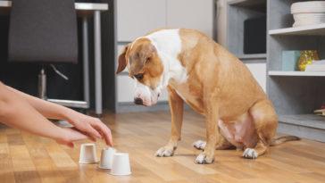 chien qui joue avec des gobelets